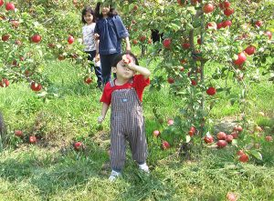 I ate the apples at the orchard