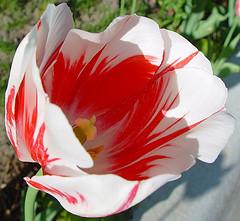 2D flower