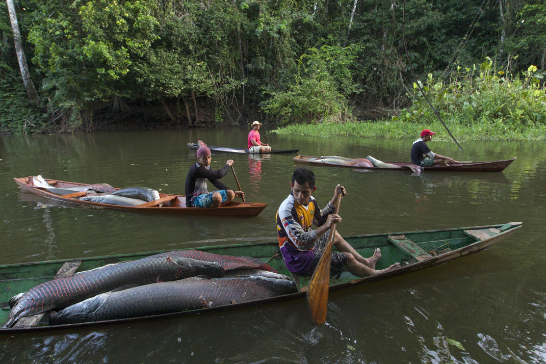 Fishing for arapaima brazil s living fossil photos for Community fish list