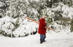 Jean Rivers inspects the damage to her trees as snow continues to fall in Cremona, Alta., Tuesday, Sept. 9, 2014. THE CANADIAN PRESS/Jeff McIntosh