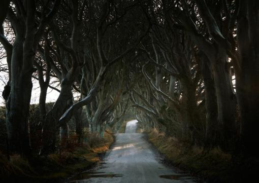 The Dark Hedges lined the roads of Northern Ireland- filming location for the Game of Thrones. (Andy Lee/Caters News)