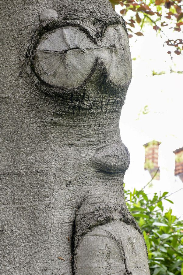 Wood yew be-leaf it? See SWNS story SWTREE: Britain's grumpiest TREE has been spotted growing in a London park – complete with a 'face'. The miserable tree has knots in the trunk that look like two eyes – complete with pupils, a nose and a 'scowling' grin-shaped mouth. The grumpy tree resides in Blackheath park in Greenwich, south east London.
