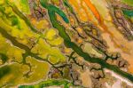 A birdseye view of the Bahia de Cadiz National Park in Spain shows the marshes alive with bright colour, thanks to a bloom of microalgae, salt deposits and orangey-brown sediment. The picture took the top prize in the From The Sky category. (Pere Soler / Wildlife Photographer of the Year 2015)