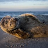 """Went to the very north of Denmark, skagen, at sunrise and found this willing model."" (Lars Lykke / National Geographic Nature Photographer of the Year contest)"