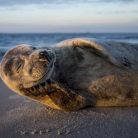 """""""Went to the very north of Denmark, skagen, at sunrise and found this willing model."""" (Lars Lykke / National Geographic Nature Photographer of the Year contest)"""