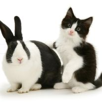 Black Dutch rabbit with black-and-white kitten Felix. (Photo: Warren photographic/Caters News)