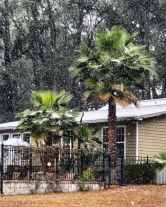 """Ahead of the approaching """"winter hurricane"""" about to hit most of the U.S. East Coast, Floridians woke up Wednesday morning to something that's very rare in the Sunshine State. Photo credit to Yahoo! News"""