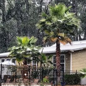 "Ahead of the approaching ""winter hurricane"" about to hit most of the U.S. East Coast, Floridians woke up Wednesday morning to something that's very rare in the Sunshine State. Photo credit to Yahoo! News"
