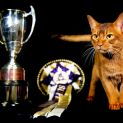 Abyssinian cat Javier earns second place for Supreme Cat 2018 in the GCCF Supreme Show at NEC Arena on October 27, 2018 in Birmingham, England. (Photo: Shirlaine Forrest/WireImage)