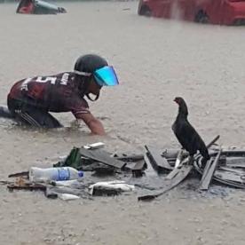 SEORANG penunggang motosikal cuba menyelamatkan seekor ayam yang terperangkap dalam banjir di Keramat, Kuala Lumpur petang tadi. - Gambar ihsan Utusan Online