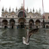 A seagull in a flooded St Mark's Square, in Venice on Tuesday. The high tide or 'acqua alta' peaked at 187cm (6.1 inches). [Luca Bruno/AP Photo]